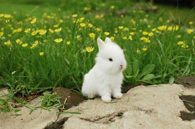 Esto Es Lo Más Tierno Que He Visto, Mira Estos 28 Conejos Bebés ...