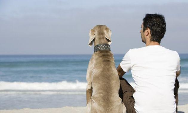 PERROS 1-perros2