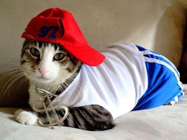 ¿Te gusta vestir a tu mascota? Entra!