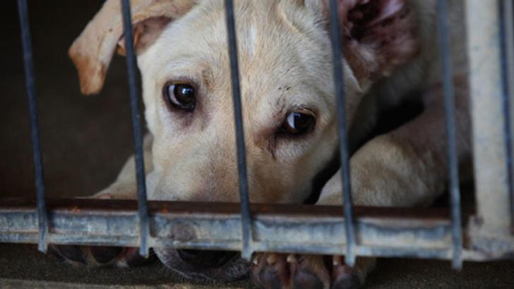 ¿Le estás Destruyendo La Felicidad A Tu Perro Sin Saberlo?