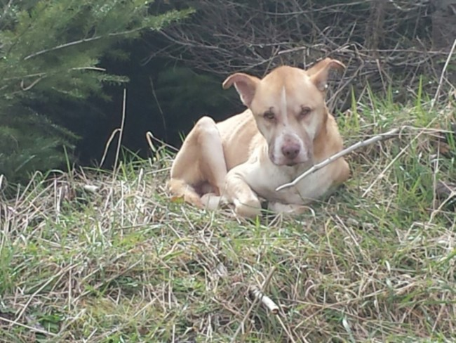 Fingió Estar Muerta Por Horas Solo Para Salvar A Perro