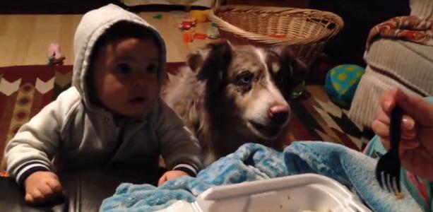 perro-dice-mamá-1