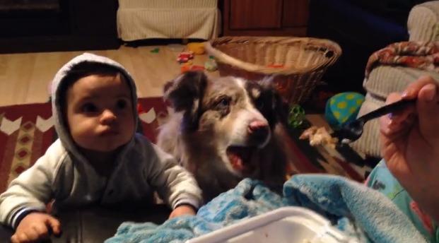 perro-dice-mamá-3